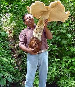 mushroom_giant.jpg
